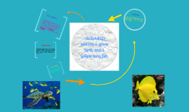 Copy of relationship between green sea turtle and yellow tang fish