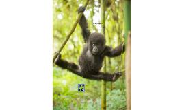bedreigde apen