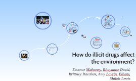 How do illicit drugs affect the environment