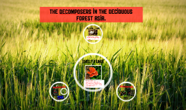 Copy of the decomposers of the deciduous forest asia