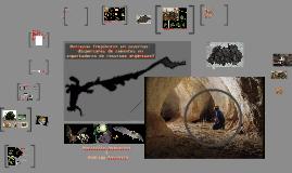 Copy of Morcegos frugívoros em cavernas: dispersores de sementes ou