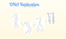 DNA Replication rap