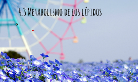 4.3 Metabolismo de los lípidos