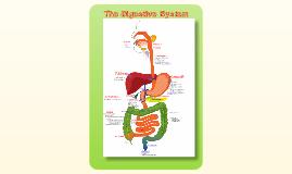 Duncan Digestive System