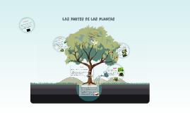 Copy of Las partes de las plantas