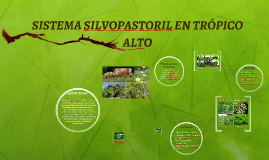 SISTEMA SILVOPASTORIL EN TRÓPICO ALTO