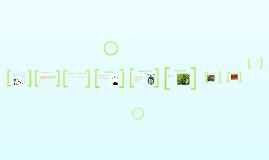 Copy of Voedselrelaties