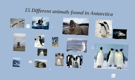 Animals found in Antarctica