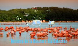 Reserva de la Biosfera Ría Celestún