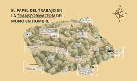 Copy of EL PAPEL DEL TRABAJO EN LA TRANSFORMACION DEL MONO EN HOMBRE