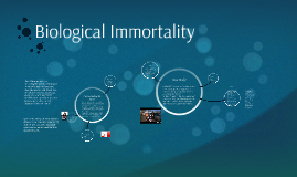 Immortality Deutsch