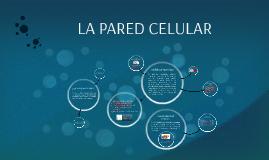Copy of PAREDES CELULARES