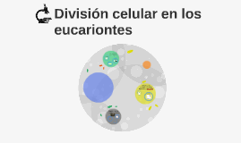 División celular en los eucariontes