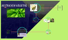 Copy of LA NUTRICIÓN VEGETAL