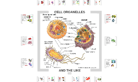 Cell Organelles and the Like