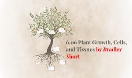 6.06 Plant Growth, Cells, and Tissues by Bradley Short