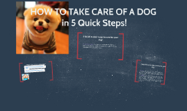 HOW TO TAKE CARE OF A DOG