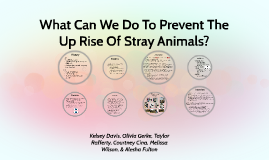 What Can We Do To Prevent The Uprise Of Stray Animals?