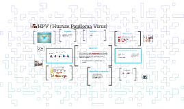 HPV ( Human Papiloma Virus)