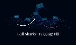 Bull Sharks, Tagging: Fiji