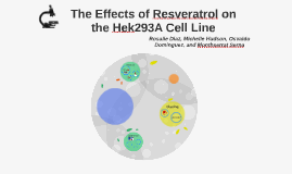 The Effects of Resveratrol on the Hek293A Cell Line