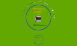 Copy of REHABILITACION DE TENDONES FLEXORES Y EXTENSORES DE LA MANO