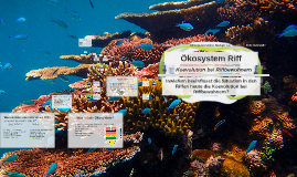 Korallenriff Entstehung