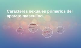 Caracteres sexuales primarios del aparato masculino.