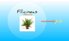Filicineas