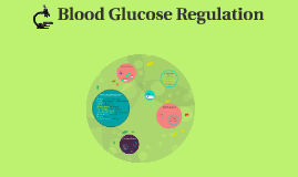Blood Glucose Regulation