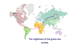 The nightmare of the green sea turtles