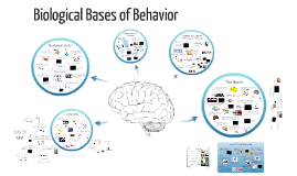 Copy of Biological Bases of Behavior
