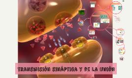 transmisión sináptica y de la unión
