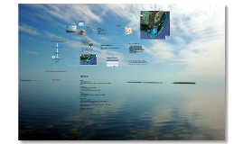 Everglades Project Proposal