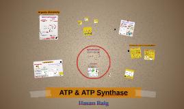 ATP & ATP Synthase Organizer