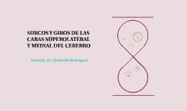 SURCOS Y GIROS DE LAS CARAS SUPEROLATERAL Y MEDIAL DEL CEREB