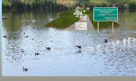 Place des oiseaux d'eau dans le fonctionnement des Ecosystèm
