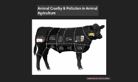 Animal Cruelty & Pollution in Animal Agriculture