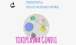 TOXOPLASMA GANDII