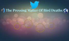 The Pressing Matter Of Bird Deaths