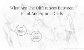 What Are The Differences Between Plant And Animal Cells