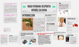 MACA PERUANA DESPIERTA INTERÉS EN CHINA