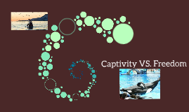 Captivity VS. Freedom