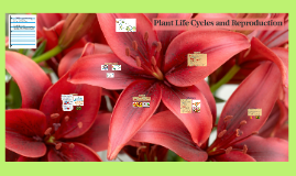 Plant Life Cycles and Reproduction