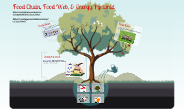 Copy of Food Chain, Food Web & Energy Pyramid