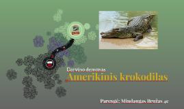 Amerikinis krokodilas