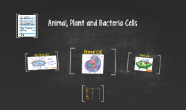Animal, Plant and Bacteria Cells
