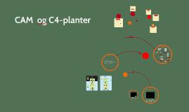 CAM og C-4 planter