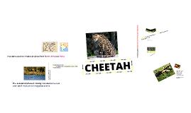 animal -bio