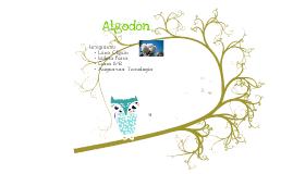 Algodon 3